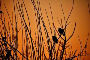 Photo by Ravi Shekhar on Unsplash